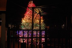 Rainbow Tree (MTSOfan) Tags: christmas gltb rainbowtree openandaffirming