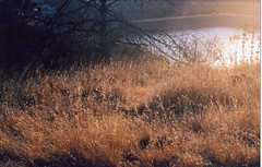 Anderson Dam (Let It Be Raw) Tags: film 35mm dam wheat oats morgahill