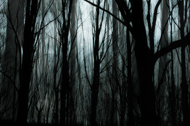 the woods are lovely, dark, and deep
