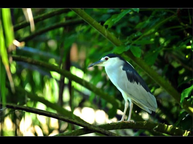 Zoo Taiping 7