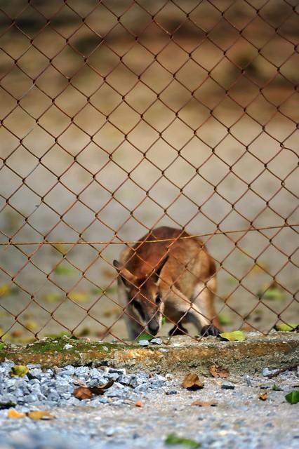 Zoo Taiping 75