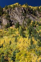 Autumn in Colorado (iuk) Tags: autumn trees usa tree yellow alberi flora colorado unitedstates sigma giallo northamerica polarizer albero autunno cpl stagioni sanjuanmountains lightroom ouray cokin statiuniti sigma2870mmf28exdg polarizzatore sigma2870 eos400d canoneos400d cokincircularpolarizer nordamerica cokincpl