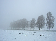 Hazy shade of winter (RainerSchuetz) Tags: winter mist snow tree fog avenue birchtrees bangles flickrrocks
