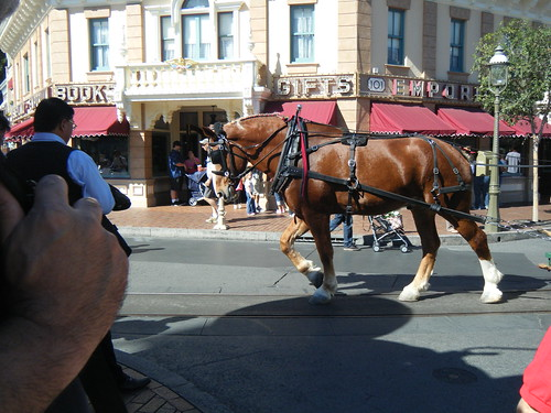 Disneyland! 019