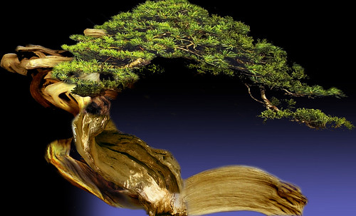 """Bonsai 064 • <a style=""""font-size:0.8em;"""" href=""""http://www.flickr.com/photos/30735181@N00/5261939306/"""" target=""""_blank"""">View on Flickr</a>"""