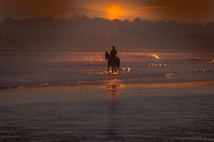 On Golden Pond (Zimmergimmer) Tags: ocean ireland sea horse beach nikon surf ride rush jockey
