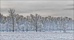 Givre (kikikentucky) Tags: trees winter white snow field landscape frozen