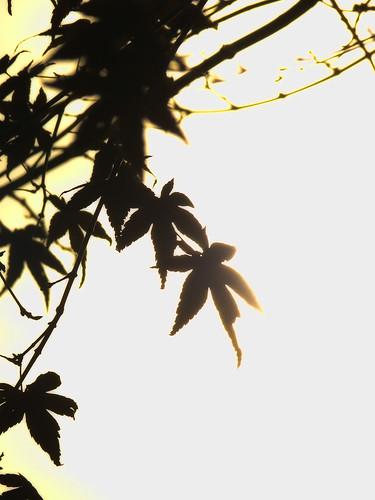 The last autumn tint