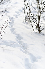 Footsteps in the snow (Eivind 84) Tags: trees winter white snow forest walking path walk tracks footprints