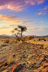 ( saudph) Tags: art nikon saudi arabia tabuk saud d90 gnd aljethli