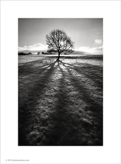 Winter Sun, Poynton, Cheshire (Ian Bramham) Tags: winter light bw sun snow tree nikon shadows cheshire 2010 poynton d700 higherpoynton bwfineartphotography ianbramham 1635vr welcomeuk