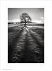 Winter Sun, Poynton, Cheshire (Ian Bramham) Tags: winter light bw sun snow tree nikon shadows cheshire 2010 poynton d700 higherpoynton bwfineartphotography ianbramham 1635vr welcomeuk