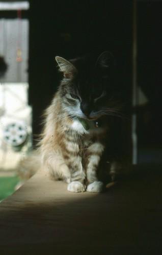 winnie's last picture