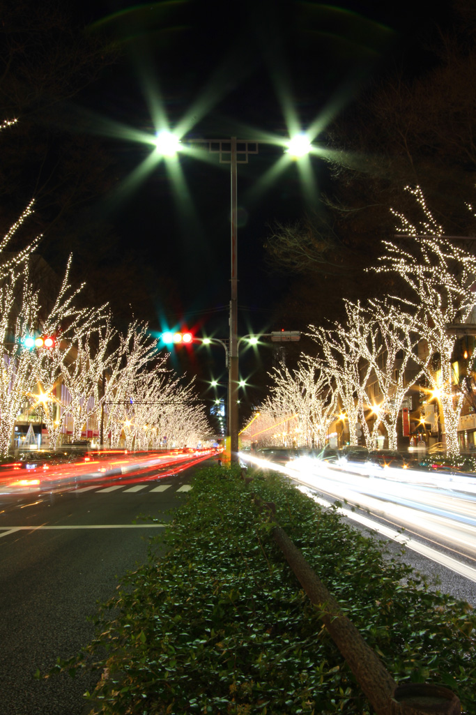 Omotesando Illuminations 2010 (6)