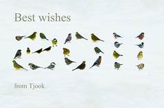 Best wishes 2011 from Tjook (Tjook) Tags: new original winter snow birds by garden season cards happy design photo interesting good year newyear best card experience wishes editorial years greetings greeting photodesign 2011 photoexperience tjook carduelishornemannicarduelisspinus pyrrhulapyrrhulaparusmontanusparusmajorparuscaeruleus