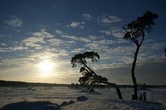 Kootwijker Zand in de winter (foto 1 van 5) (hansvdaa) Tags: winter snow nature landscape sand desert sneeuw nederland thenetherlands natuur veluwe landschap zand zandverstuiving top50 kootwijkerzand blowingsand newvision abigfave flickraward flickraward5 peregrino27newvision