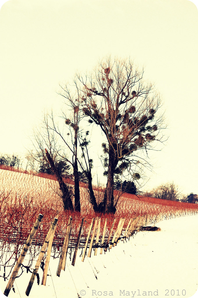 Xmas snow 3.3 bis