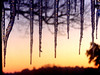 Icicles on Christmas Day (algo) Tags: sunset england cold ice interestingness topf50 topv555 topv333 colours searchthebest chilterns explore algo topf100 icicles 100f chilternhills 50f explore115 explore144