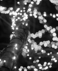 NYC 12/28/10 (Jason Arends) Tags: christmas nyc newyorkcity winter blackandwhite snow 120 mamiya film night mediumformat lights bokeh manhattan delta 3200 ilford rb67 ddx ilforddelta ilfordilfotecddx film:brand=ilford film:iso=3200 developer:brand=ilford film:name=ilforddelta3200 developer:name=ilfordilfotecddx filmdev:recipe=6261
