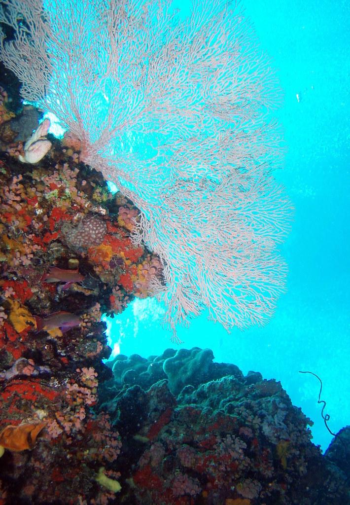 Scuba diving on australia 39 s great barrier reef - Dive great barrier reef ...