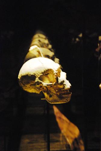 """80 """"Miguelón"""" Homo antecessor Museo de la Evolución Humana 0511"""
