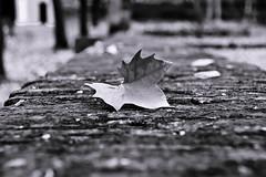 Recin cada (grego.es) Tags: hojas rboles pueblo otoo favorita ermita 2010 a700 villaverdedelrio sonyalpha700 wwwgregoes