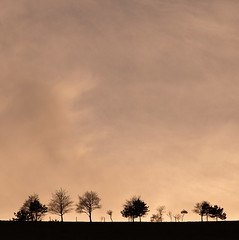 ashen (penwren) Tags: trees winter sussex silhouettes negativespace southdowns fulking