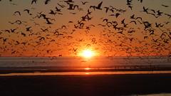 Perfect Afternoon II (pmmatos) Tags: sunset pordosol sun sol praia beach portugal seagull almada