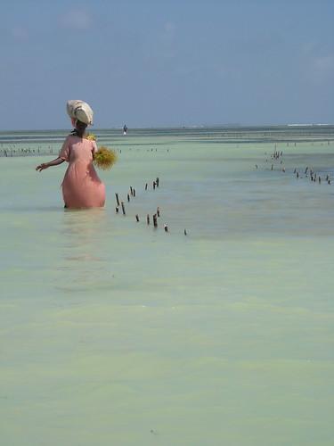 Coltivatrice di alghe