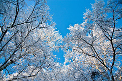 Wonderland (ejoh) Tags: blue trees sky white snow frost wonter