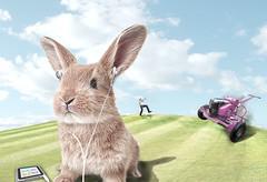 [フリー画像] グラフィックス, フォトアート, 兎・ウサギ, 201101181100