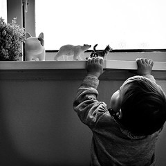 Reaching out... (harvest breeding) Tags: bw baby window blackwhite bn finestra windowsill bianconero animali reachout giocattoli toyanimals davanzale reachingut instantpage