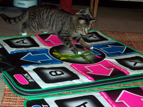 kudzu plays ddr.