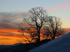 Tree Silhouettes (BlueRidgeKitties) Tags: landscape northcarolina blueridgeparkway westernnorthcarolina southernappalachians ccbyncsa moseshconememorialpark canonpowershotsx10is