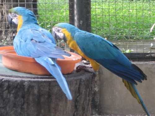 Parrots during feeding time.