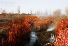 Fog on the river (FedeGrau ) Tags: world color colors silhouette fog sunrise dawn exposure places amanecer lugares mundo niebla siluetas exposicin amaneceres
