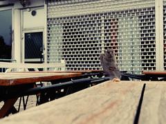 (lukas kozmus) Tags: summer photography photo foto fotografie sweden sommer schweden skandinavien picture pic lukas bild scandinavia stockhom kozmus lukaskozmus