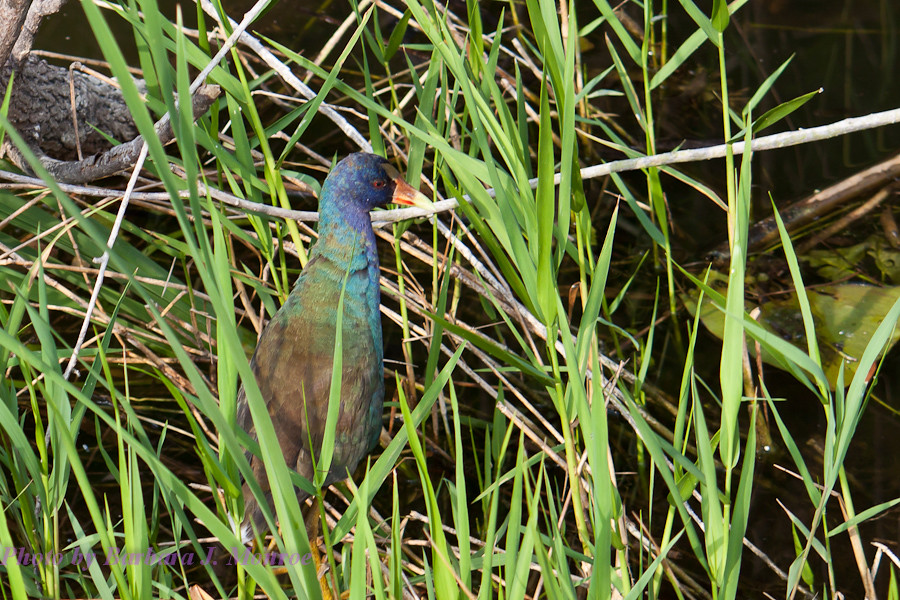 Everglades National Park (17 of 40)