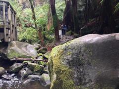 lorne 357 (raqib) Tags: holiday nature water trekking trek waterfall hiking victoria hike falls bushwalking vegetation rc lorne iphone erskine erskinefalls waterfallaustralia