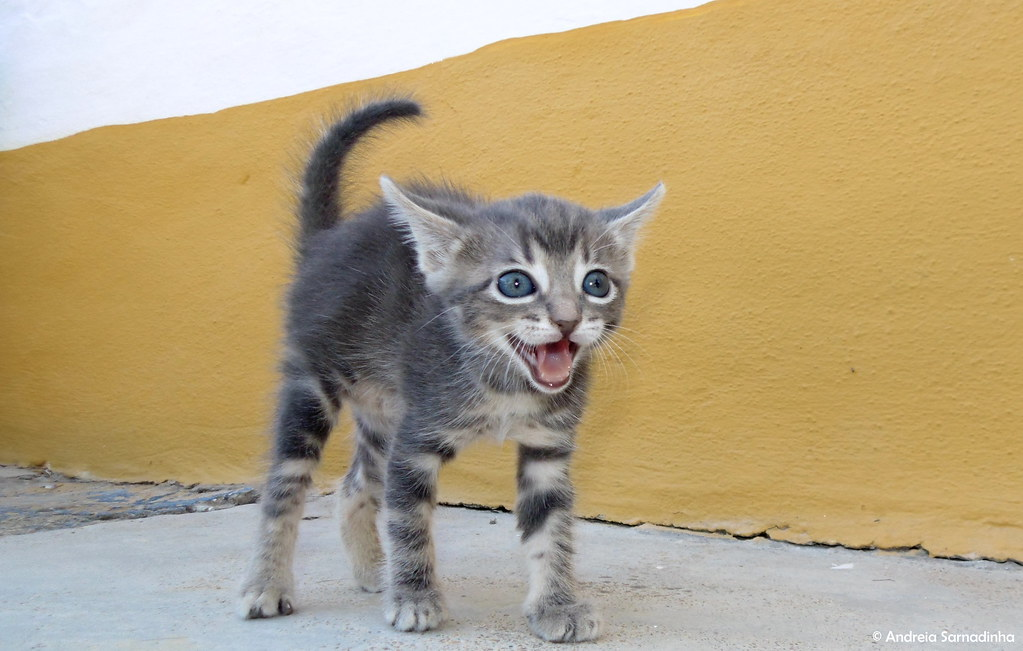 chats portugueses travestis algarve