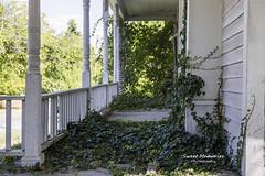 Overgrown Ivy (paulawalla37) Tags: oncewashome
