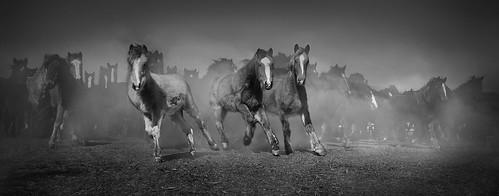 Horse_Stampede_Final