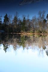 Reflections (Rogue_Scholar) Tags: autumn trees reflection fall nature water pine adirondacks upstateny northlake naturesfinest