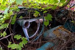 Horn Ring (Mr Perry) Tags: vines turquoise rambler steeringwheel carinterior sigma1020mm autowreckers wreckingyard mcleans hornring pentaxk10d