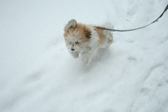 Super Snow Dog!