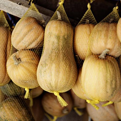 Frutos del otoño. Calabaza