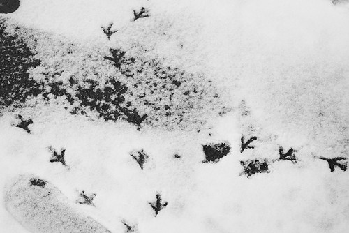 Nu-pieds dans la neige