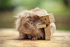 So Fluffy (Antty+) Tags: pet cute leave animal lady guinea pig airport furry singapore do please market box awesome small adorable fluffy australia boring mo cardboard abandon anton lonely lame ang changi gaga tang helpless kio bishan danbo danboad antty antontang