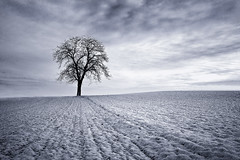 Winter (Thierry Hennet) Tags: morning winter blackandwhite white snow black tree field zeiss landscape switzerland suisse sony isolation baretree cloudysky desolation tranquilscene a900 coldtemperature cz1635mmf28