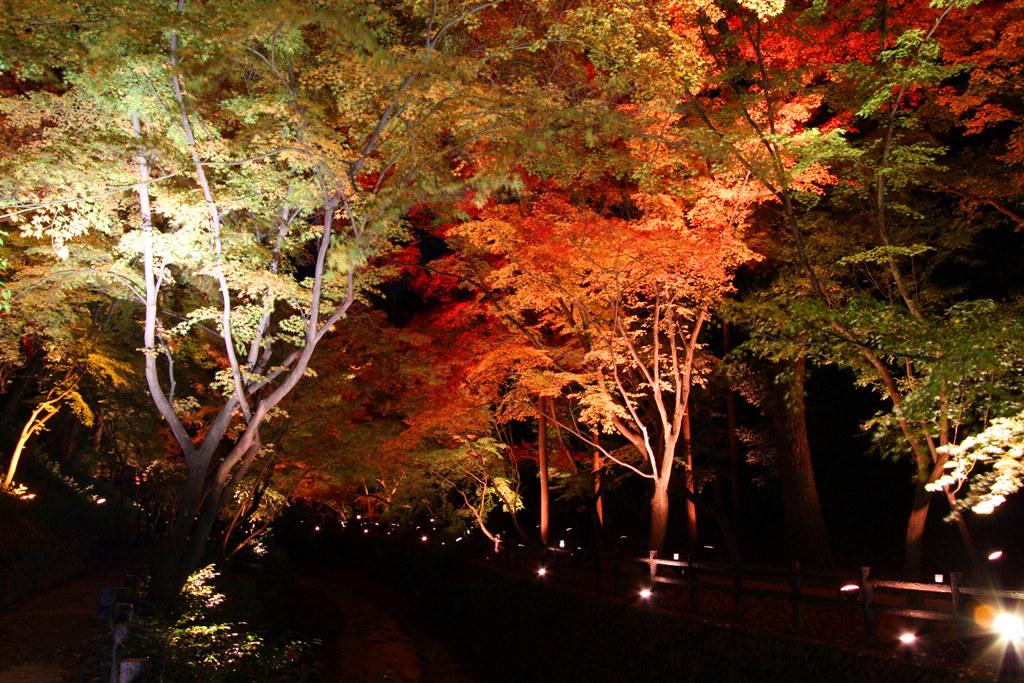 Kitanotenmangu Red Leaf Lightup 2010 (3)